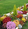 So wünschen sich die meisten Besucher eine Gartenschau. - panoramio.jpg