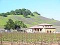 Solano-hillside 003.jpg