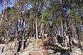 Southern Konnevesi National Park 3.jpg