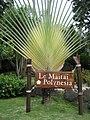 Specimen Traveller's Palm - panoramio.jpg