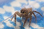 Spider 14.jpg