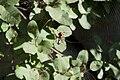Spider web (3).jpg
