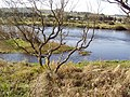 Split in River Dee opposite caravan park - geograph.org.uk - 1248837.jpg