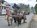 Sri Lanka Photo144.jpg