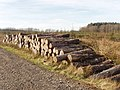Stack of timber, Summerwell Moor Plantation - geograph.org.uk - 687835.jpg