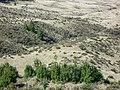 Starr-041211-1478-Pinus patula-habit-Puu Nianiau-Maui (24603067942).jpg