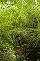 Steenbergse bossen 17.jpg