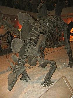 Stegosaurus 01.jpg
