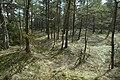 Stenkumla gravfält 4-1 - KMB - 16001000006854.jpg
