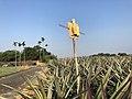 Stick of Earth God in Minsyong, Chiayi.jpg