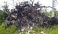 Strom-vyvrácený-šumava.jpg
