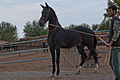 Studfarm in Turkmenistan - Flickr - Kerri-Jo (5).jpg