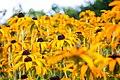 Summerhouse Garden Flowers (8096944603).jpg