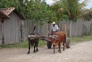 Talanga road Honduras