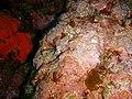 Taranga pinnacles Hen and Chicken Islands PA232347.JPG