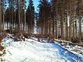 Tatranska Lomnica - panoramio (19).jpg