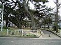 Tenpozancho - panoramio (13).jpg