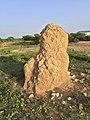 Termite mound (30149049144).jpg