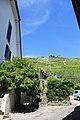 Terrasses de Lavaux - panoramio (107).jpg