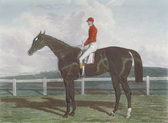 The Baron (horse) - Image: The Baron (IRE)