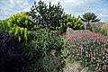 The Dry Garden at RHS Garden Hyde Hall, Essex, England - border planting.jpg