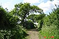 The Icknield Way in Spring - geograph.org.uk - 72414.jpg