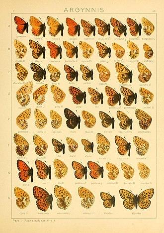 Boloria caucasica - Boloria caucasica in Seitz 68b