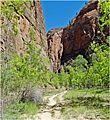 The Road Less Traveled, Zion NP, Riverside Walk 5-1-14za (14502187773).jpg
