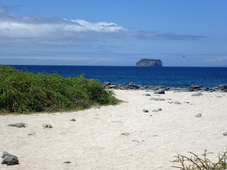 The beach at North Seymour Island in the Galapagos.jpeg
