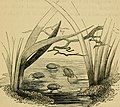 The book of the aquarium and water cabinet; or Practical instructions on the formation, stocking, and management, in all seasons, of collections of fresh water and marine life (1856) (20208053318).jpg