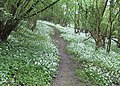 The path is easy to find - geograph.org.uk - 796347.jpg