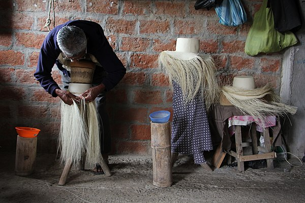 The toquilla straw hat is woven from fibres from a palm tree characteristic of the Ecuadorian coast.jpg