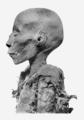 Thutmose I head profile.png