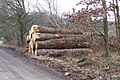 Timber Stack, Yewtrees Lane, Broomhead, near Bolsterstone - geograph.org.uk - 1732423.jpg