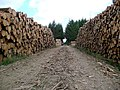 Timber harvesting at Sneddon Law - geograph.org.uk - 843171.jpg