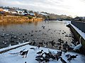 Tiverton , The River Exe and Ducks - geograph.org.uk - 1658333.jpg