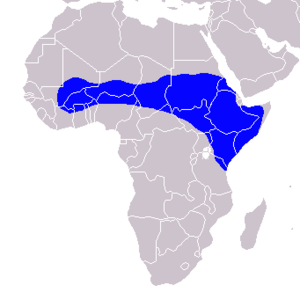 Northern red-billed hornbill - Image: Tockus erythrorhynchus Distribution