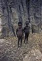 Togo-benin 1985-046 hg.jpg