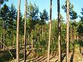 Tomsky District, Tomsk Oblast, Russia - panoramio (148).jpg