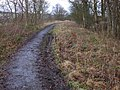 Trackbed, in Spring Wood - geograph.org.uk - 656595.jpg