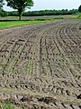 Tractor tracks in the dry fields, Drenthe.jpg