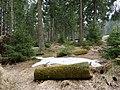 Trail from Sonnenberg to Rehberger Planweg 03.jpg