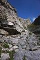 Trail to Lämmerenhutte 3.jpg