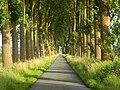 TreeTunnel (R.H.).jpg