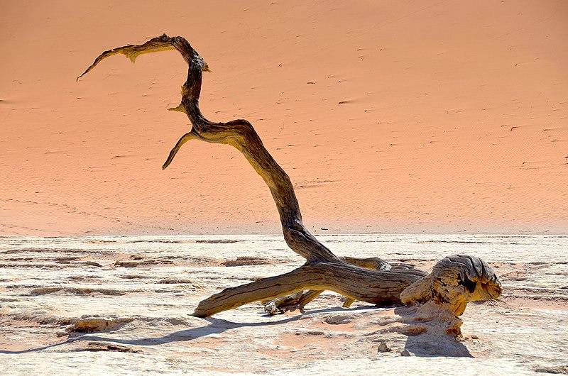 File:Tree trunk at Deadvlei, Namibia (2017).jpg