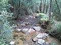 Trilha na Mata (Quedas do Rio Bonito) - panoramio.jpg