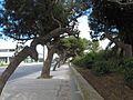 Triq Il-Mosta, Ħal Lija, Malta - panoramio (30).jpg