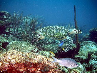 Morrocoy National Park - Reef located in Morrocoy National Park.