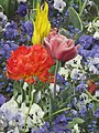 Tulipes Pensées Myosotis.jpg