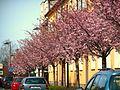 Turnov Spring - panoramio.jpg